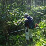 竹山の道刈